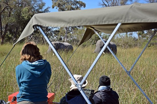 Okavango Delta: People taking photos from boat
