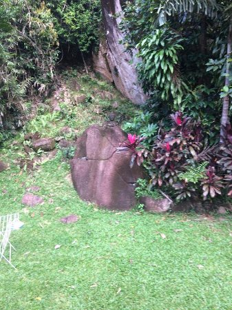 Diwan, أستراليا: Beautiful Tranquil Gardens