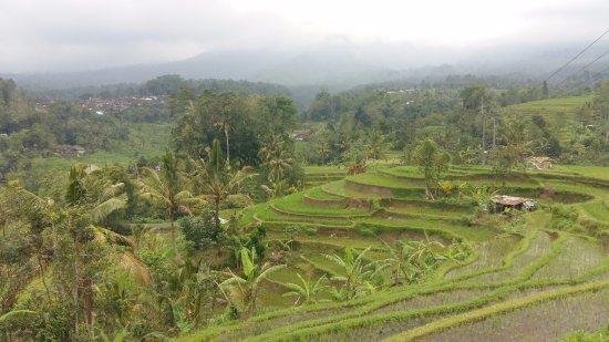 Jatiluwih Green Land: Schitterend uitzicht over Jatiluwih
