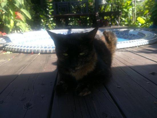 Haapiti, Polinesia francese: IMG_20170608_122127_large.jpg