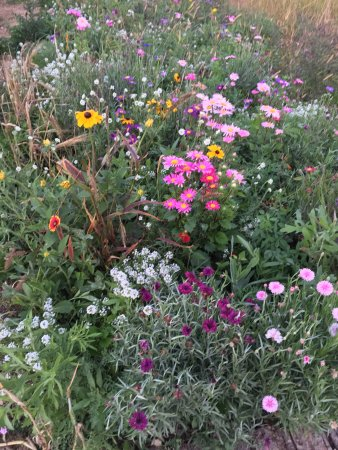 Menomonie, Висконсин: Wildflowers near the parking lot. Oct 5, 2016