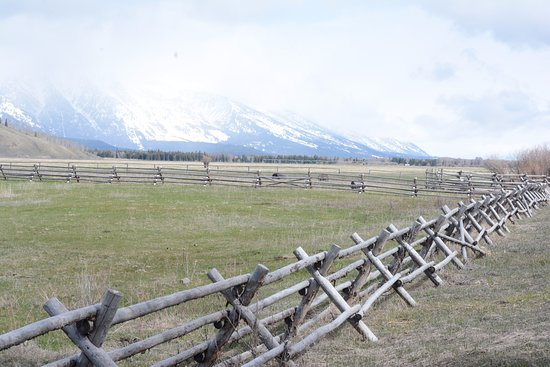 Jackson Hole in June