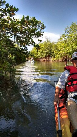 Fort Pierce, FL: Going through the mangrove trails.