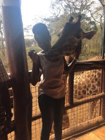 African Fund for Endangered Wildlife (Kenya) Ltd. - Giraffe Centre: photo3.jpg