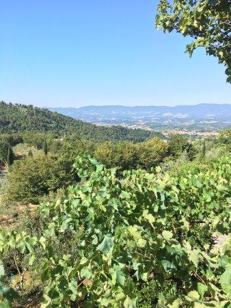 Castelfranco di Sopra, Italy: photo3.jpg