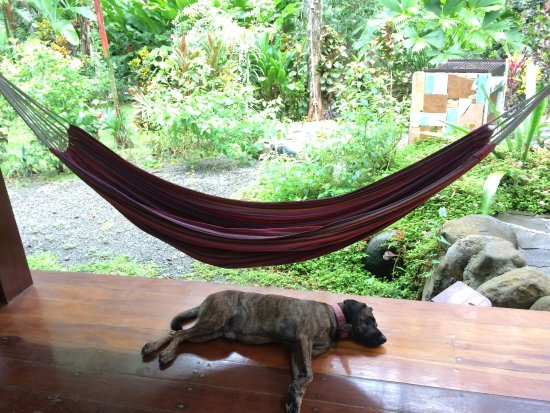 Congo Bongo Ecolodges Costa Rica 사진