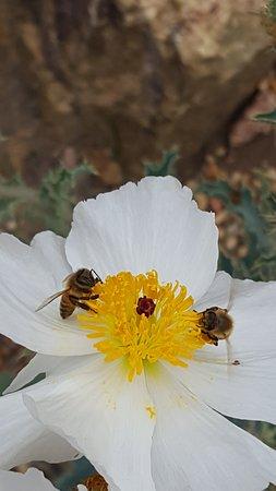 San Diego Botanic Garden: So many photo opportunities