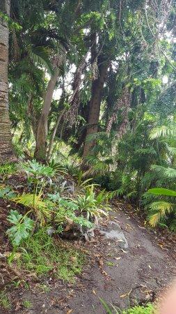 San Diego Botanic Garden: Beautiful trails