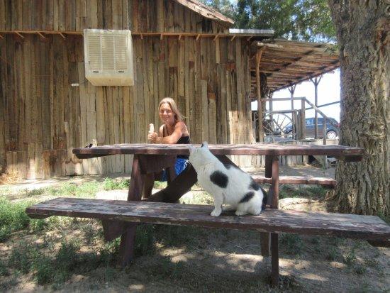 Fallon, NV: Hyggeligt sted for et kort stop