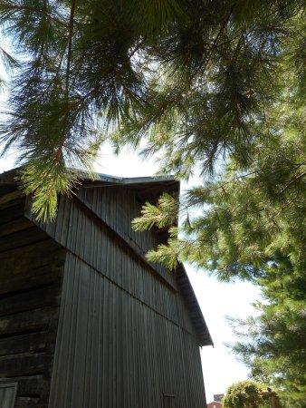 Jasper, IN: Schaeffer Barn with nearby pine trees