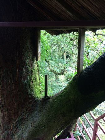Canopy Lodge: Views from the whimsical treehouse on the grounds of the Lodge.