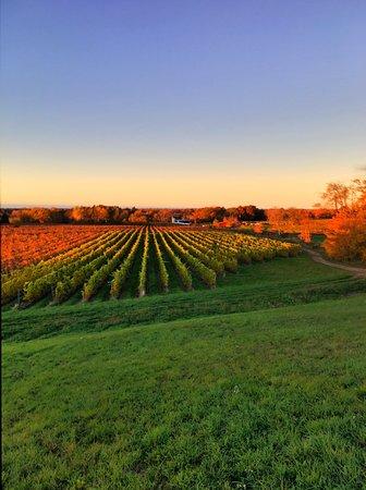 Westfield, NY: Chardonnay at fall sunset