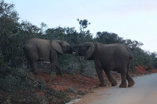 Addo Elephant National Park, Sudáfrica: DSC04679_large.jpg