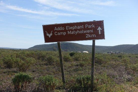 Addo Elephant National Park, Sudáfrica: DSC04652_large.jpg