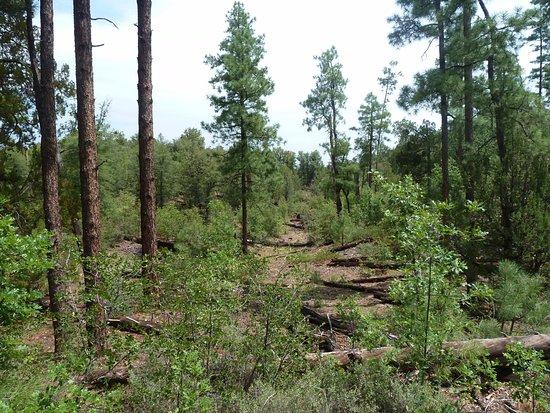 Prescott, AZ: scenery along the trail