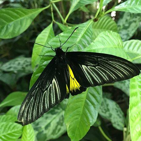 Butterfly Rainforest 사진