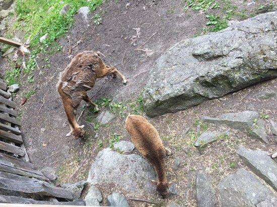 Tangen dyrepark rabatt
