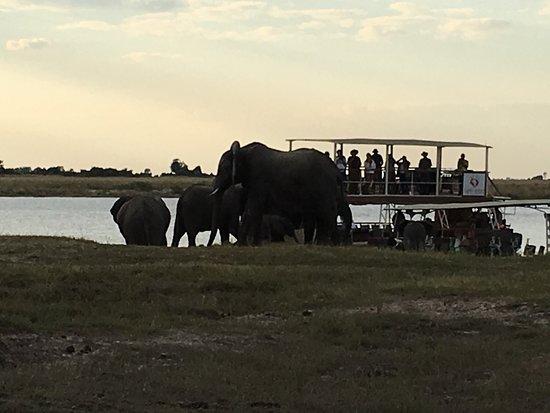 Chobe River Boat Cruises: photo3.jpg