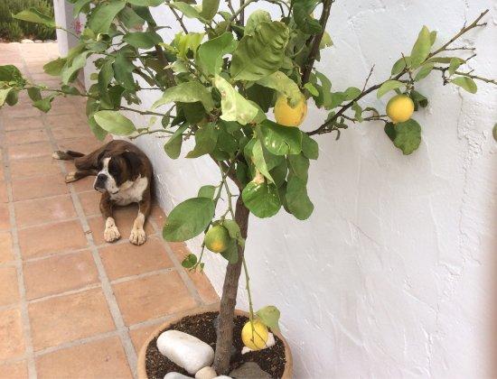 Casa Limones & Los Olivos: photo0.jpg