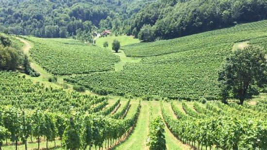 Gamlitz, Österrike: Aussicht