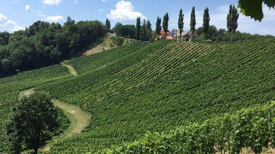Gamlitz, Österrike: fast schon toskanisch