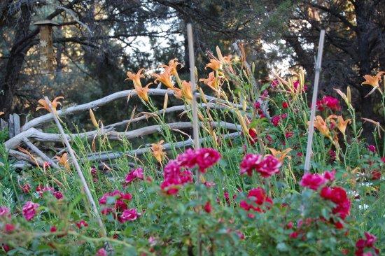 Mancos, CO: Peggy's beautiful gardens!