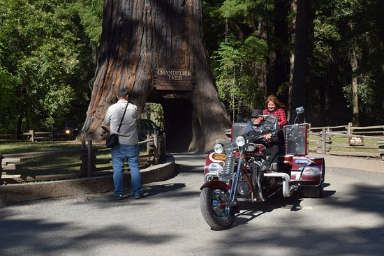 Leggett, Californien: An interesting motorcycle coming out of the Tree