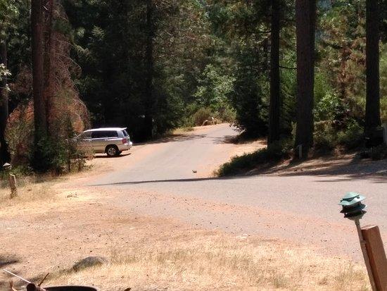 Yosemite Lakes RV Resort: IMG_20170714_135541_large.jpg
