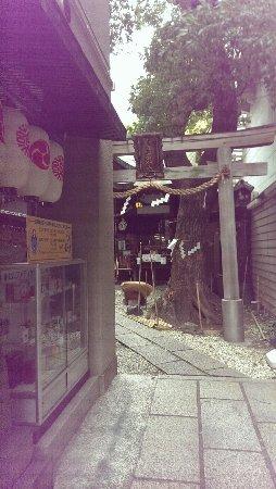 Suwa, Japan: IMAG7831_large.jpg
