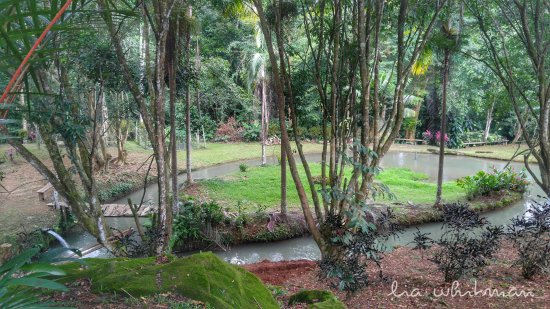 Ojochal, Costa Rica: View of one of a few tilapia pools on the property.