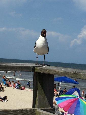 Kure Beach, Caroline du Nord : photo1.jpg