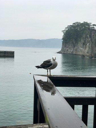 Miyako, Japan: みやこ浄土ヶ浜遊覧船