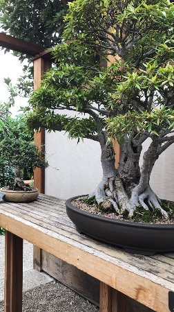 Matthaei Botanical Gardens: photo0.jpg