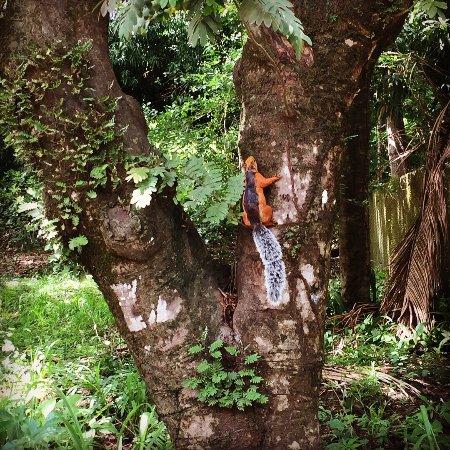 Mal Pais, Kosta Rika: photo5.jpg