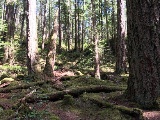 Sechelt, Canada: photo2.jpg
