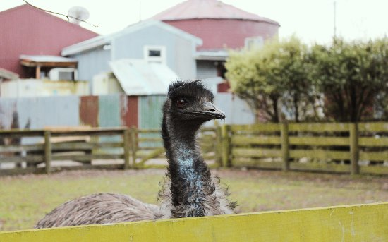 Timaru, New Zealand: Visit the Shearers Quarters Farm Wildlife!