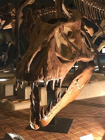 Kanagawa Prefectural Museum of Natural History: photo1.jpg