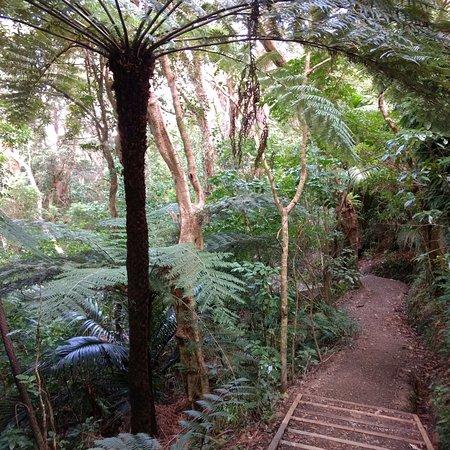 Paraparaumu, Selandia Baru: Wilkinson Track