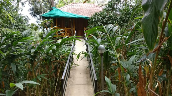 Aluva, India: Tree house