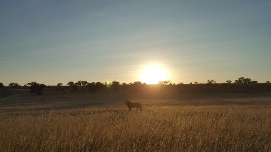 Upington, Sudáfrica: Urikaruus
