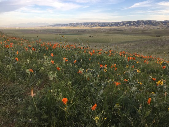 Antelope Valley California Poppy Reserve: A view looking east toward Lancaster.