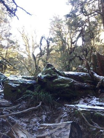 Milford, نيوزيلندا: photo2.jpg