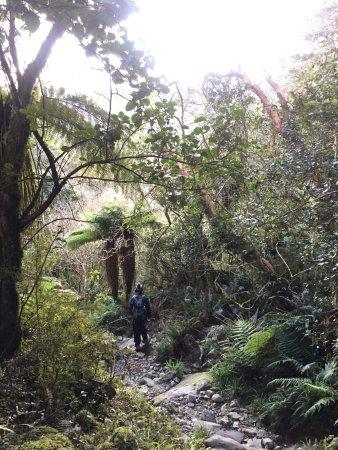 Milford, نيوزيلندا: photo4.jpg