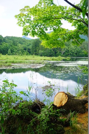 Kannonnuma Forest Park: 観音沼の景色