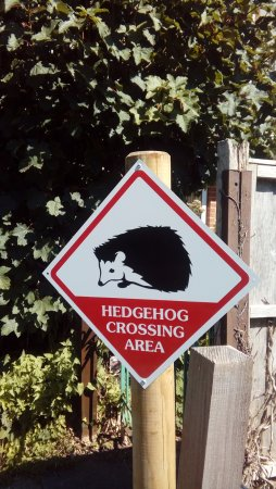 Ringwood, UK: sign by house