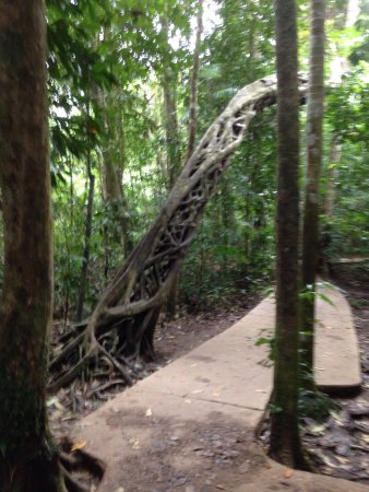Daintree Wonder Tours: photo3.jpg