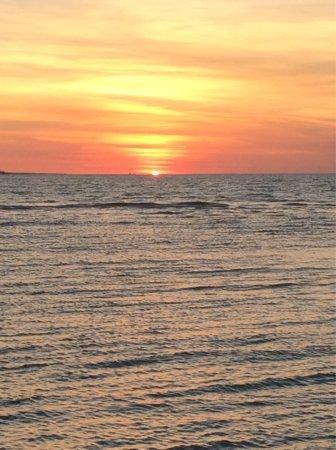 Sea Darwin: photo0.jpg