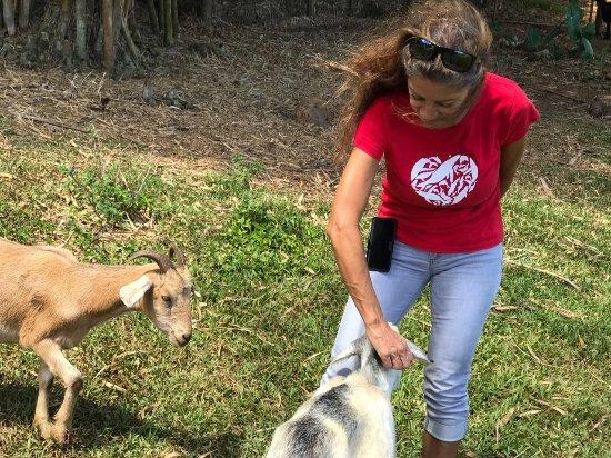 Haiku, Гавайи: Judy and the so friendly goats.