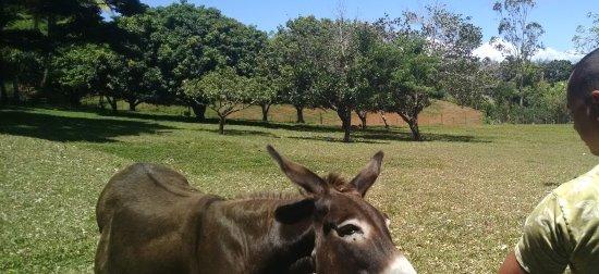 Haiku, Гавайи: Cody feeding one of the donkeys.