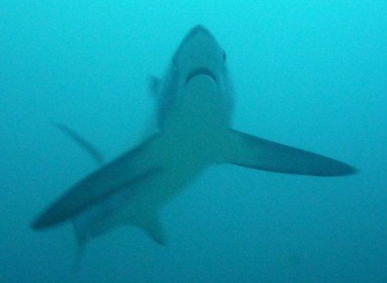 Foto de Sea Explorers Malapascua
